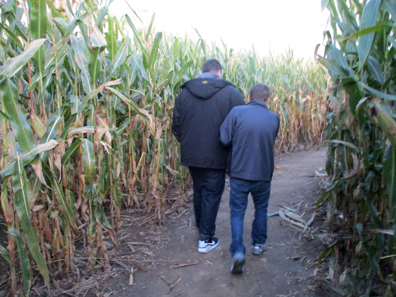 back view of two men walking on a wide path through a cornfield